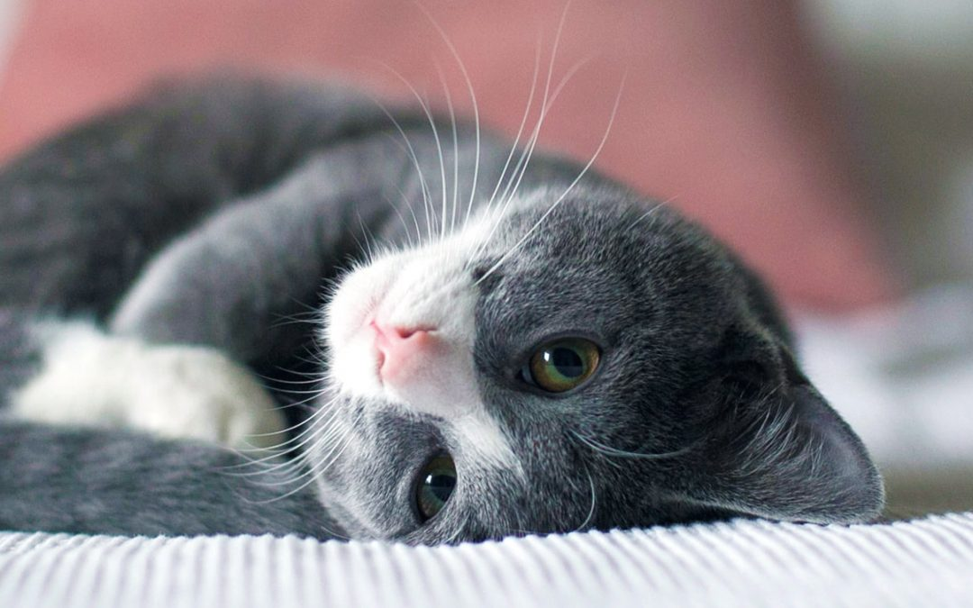 Cat Age Chart: How Old Is Your Cat In Human Years?