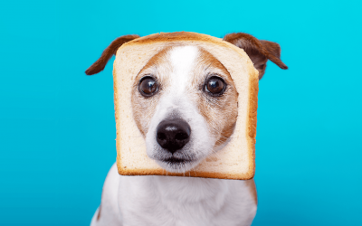 Can Dogs Eat Bread? Yes – But Should They?