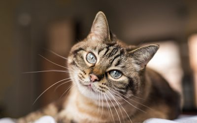 10 Cat Questions Cat Parents Can't Stop Googling! Why does my cat bite…